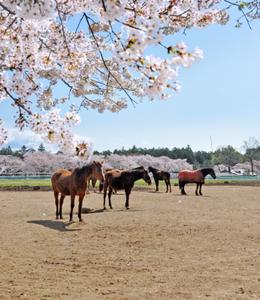 桜が咲き誇る絶景スポットへドライブ! 東海道沿いの桜の名所7選を紹介