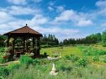 色彩豊かな大地のパレット 十勝ガーデン巡りドライブ